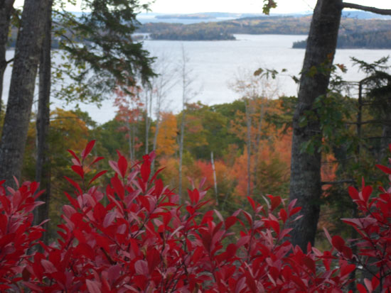 foliage on a high bluff
